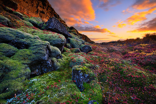 Autumn Colours in Iceland