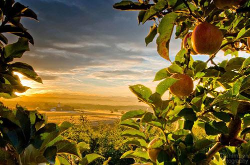 Fruity Landscape