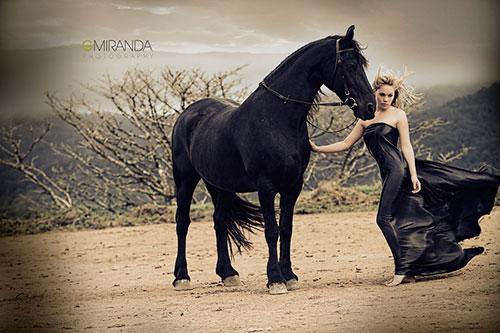 Horses Guardian